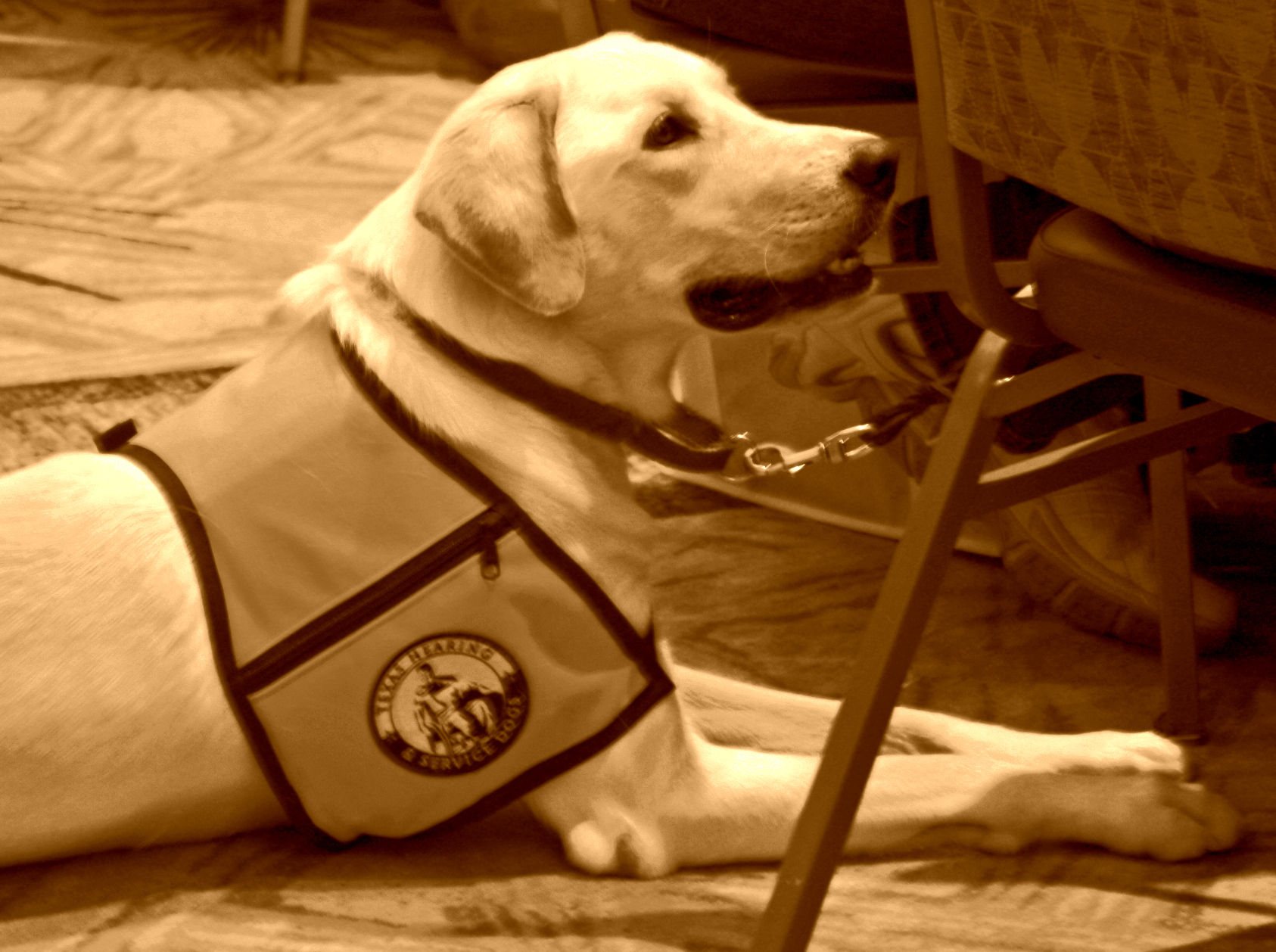 Service Dogs Help the Entire Family of an Autistic Child – Part 2