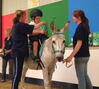 Birmingham Donkey Sanctuary provide Donkey Assisted Therapy for Children with Additional Needs