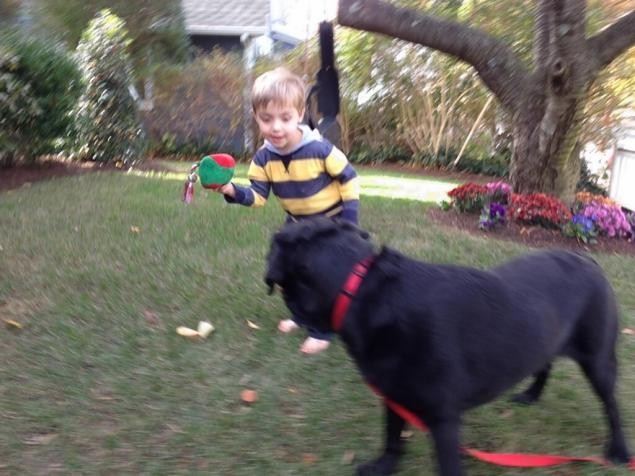 New York boy thrilled as autism service dog returns home safely