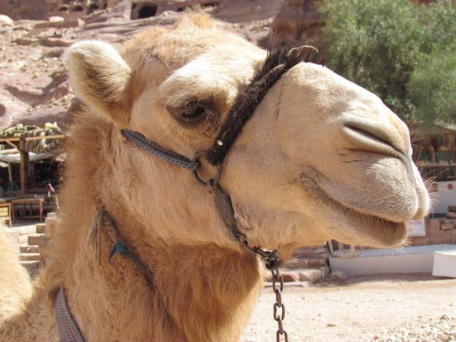 Camel milk treatment for Autism symptoms