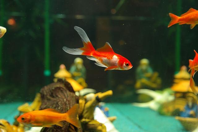 Autism and Therapeutic Aquariums