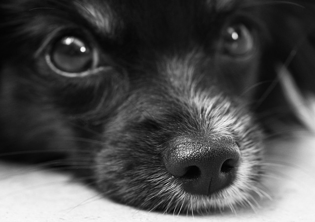 Legal dispute erupts over denied autism service dog request