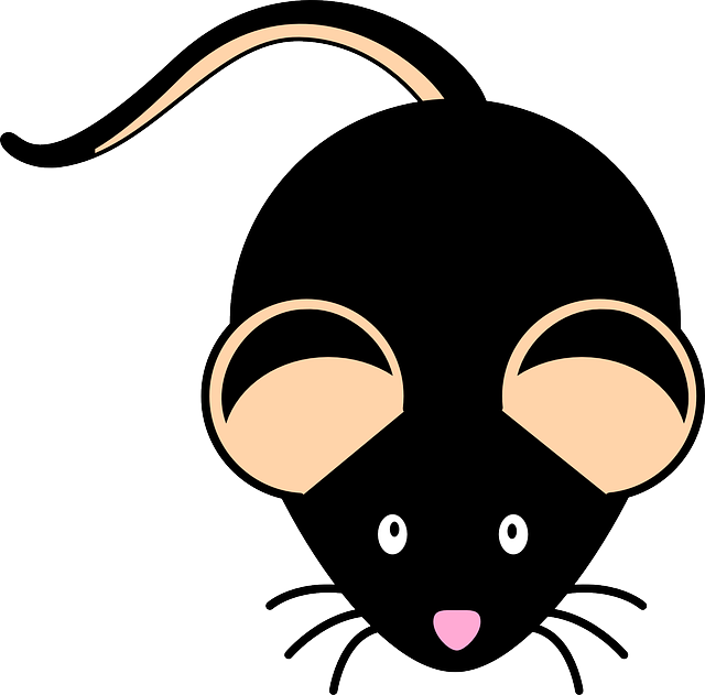 Researchers study Mohawk mice with genetic mutation linked to autism.