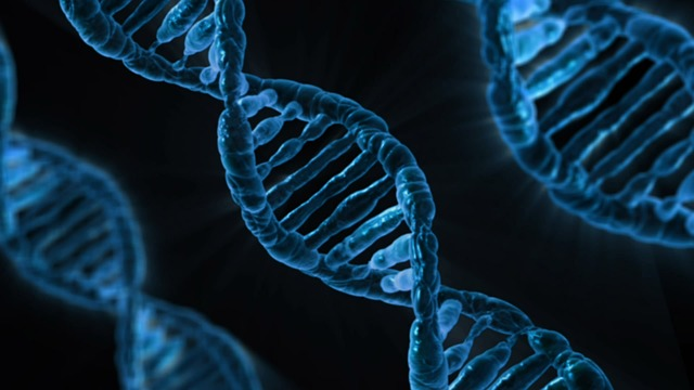 CHD8 Genetic mutation genetic mutation may lead to an autism subtype