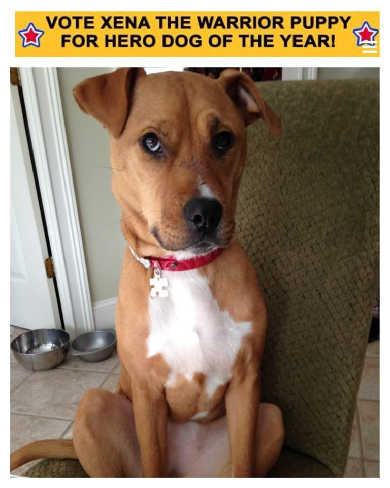 Xena the Warrior Puppy finalist in American Humane Association Hero Dog Awards