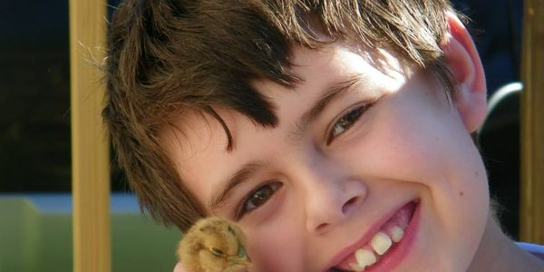 Boy with autism may lose access to therapy chickens