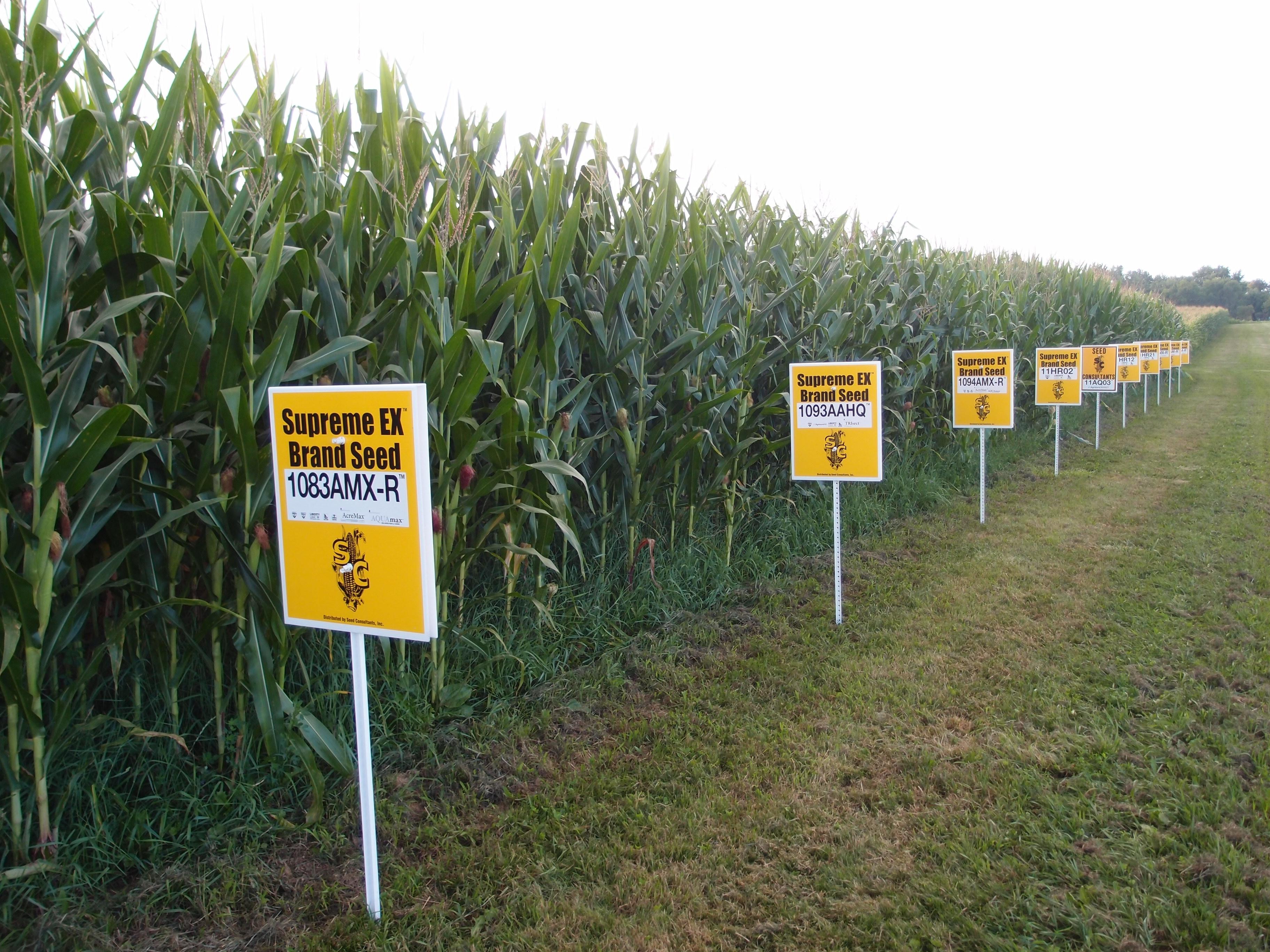 Are GMO's Causing Autism?
