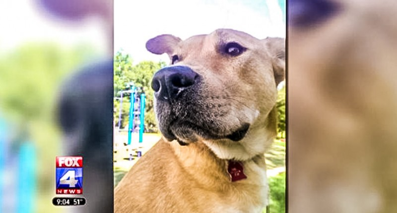 Neighbor who shot and killed teen's autism service dog faces charges – w/video