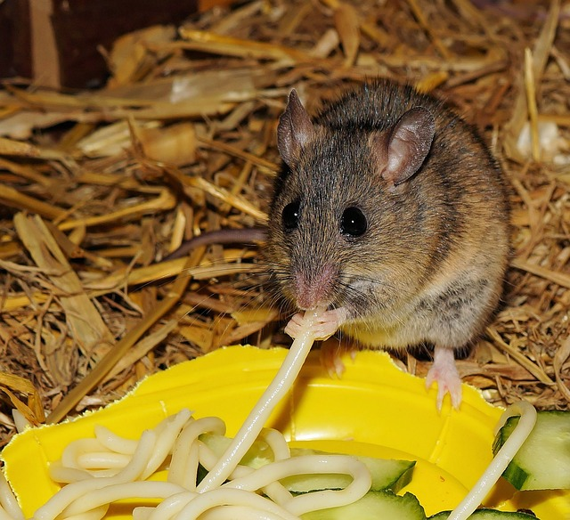 Press Release – 'Darting' mice may hold clues to ADHD, autism and bipolar disorder