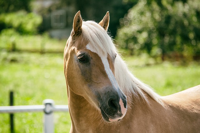 Newborn horse study may provide link to the causes of autism
