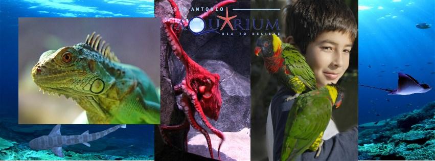 Child with autism not allowed in aquarium exhibit – w/video