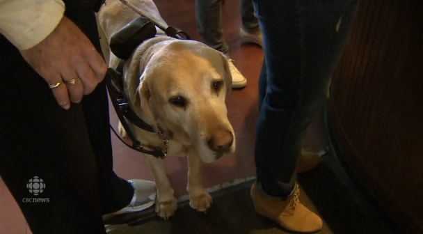 British Columbia law proposes government-issued service dog IDs – w/video