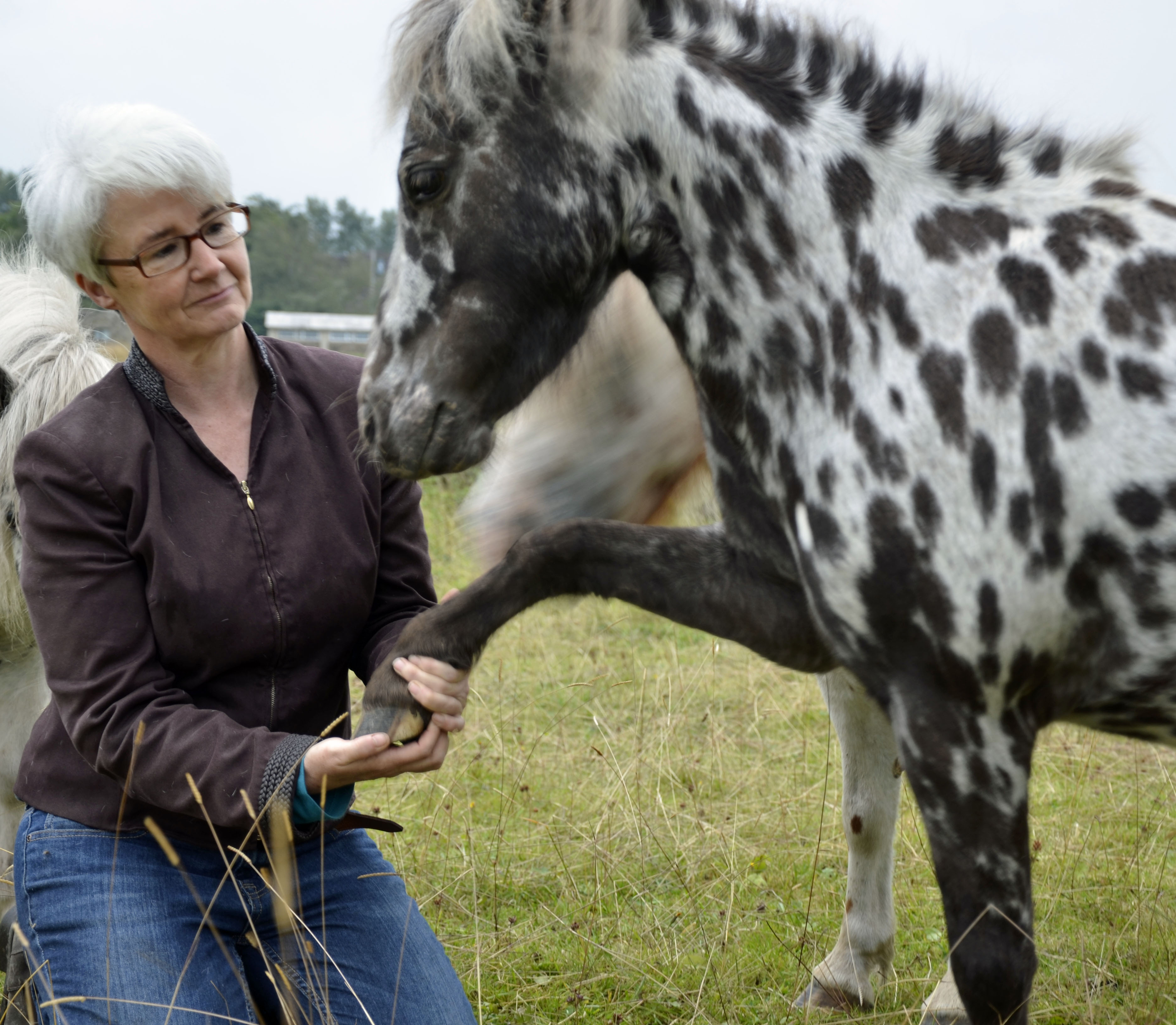Horses helping with Autism