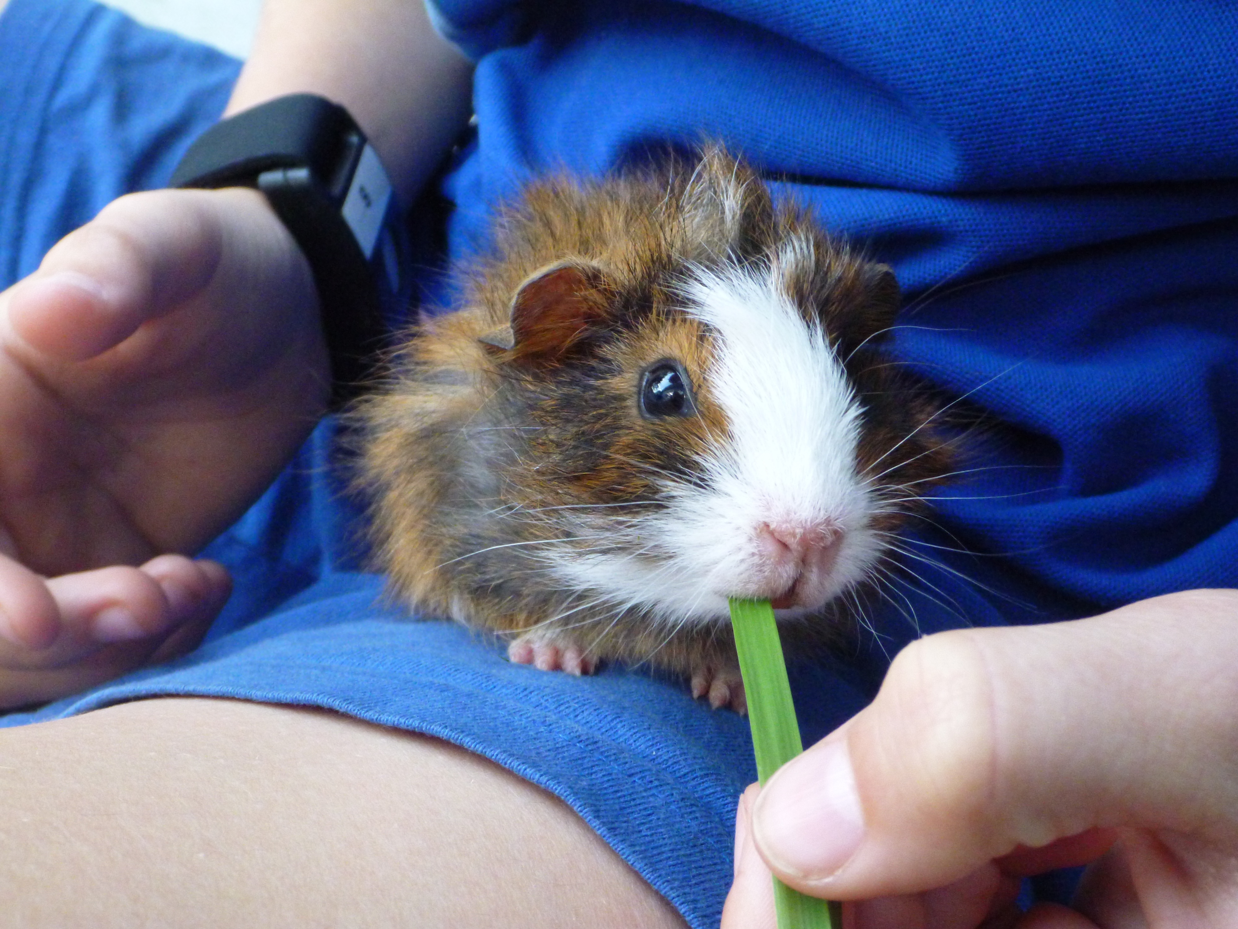 Press Release – Animals' presence may ease social anxiety in kids with autism