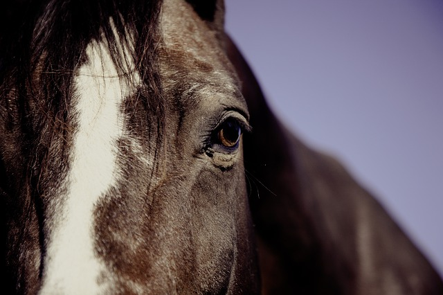 Research into newborn horses may help unlock mystery of autism