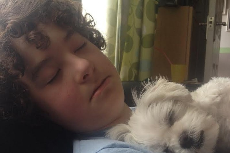 Young boy with autism starts fundraiser to get himself a service dog